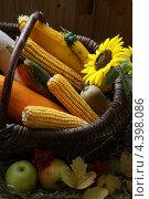 Плоды осени. Натюрморт. Стоковое фото, фотограф Скляренко Валерий / Фотобанк Лори