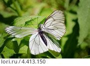 Пара бабочек. Стоковое фото, фотограф Юлия Сагитова / Фотобанк Лори