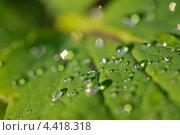 Роса на листке. Стоковое фото, фотограф Андрей Горшков / Фотобанк Лори