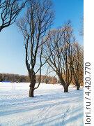 Деревья в парке, в зимний период. Стоковое фото, фотограф Raulin / Фотобанк Лори