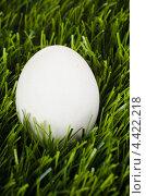 Купить «Белое куриное яйцо в зелёной траве», фото № 4422218, снято 12 марта 2013 г. (c) Александр Макаров / Фотобанк Лори