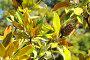 Плод магнолии крупноцветковой, эксклюзивное фото № 4422254, снято 6 марта 2012 г. (c) Юрий Морозов / Фотобанк Лори