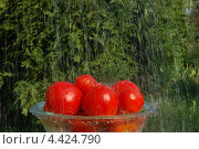 Купить «Урожай», фото № 4424790, снято 14 августа 2010 г. (c) Екатерина Пивоварова / Фотобанк Лори