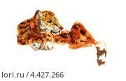 Леопард. Акварельный рисунок. Стоковая иллюстрация, иллюстратор Ковалева Наталья / Фотобанк Лори