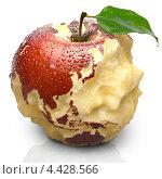 Купить «Красное яблоко с силуэтами континентов», иллюстрация № 4428566 (c) Антон Балаж / Фотобанк Лори