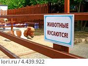Пони. Стоковое фото, фотограф Наталия Банникова / Фотобанк Лори