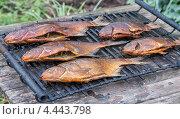 Купить «Копченая рыба на решетке», фото № 4443798, снято 16 февраля 2019 г. (c) FotograFF / Фотобанк Лори