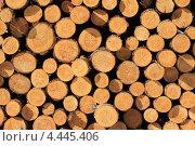 Торцы спиленных деревьев. Стоковое фото, фотограф Владимир Нестеренко / Фотобанк Лори