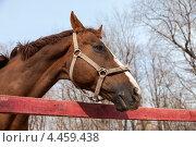 Купить «Портрет лошади весной в загоне», фото № 4459438, снято 23 февраля 2019 г. (c) FotograFF / Фотобанк Лори
