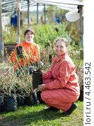 Купить «Две женщины выбирают саженцы садовых растений», фото № 4463542, снято 2 мая 2012 г. (c) Яков Филимонов / Фотобанк Лори