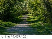 Старая аллея. Стоковое фото, фотограф Александра Задохина / Фотобанк Лори