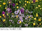 Лютики, цветочки. Стоковое фото, фотограф Александра Задохина / Фотобанк Лори