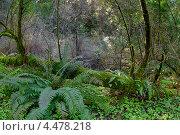 Лесной пейзаж. Стоковое фото, фотограф light / Фотобанк Лори