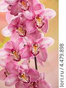 Купить «Орхидея», фото № 4479898, снято 6 апреля 2013 г. (c) Юрий Викулин / Фотобанк Лори