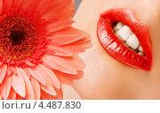Девушка с ярко-красными губами и цветком герберы. Стоковое фото, фотограф katalinks / Фотобанк Лори