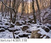 Горный лес зимой. Стоковое фото, фотограф Пётр Квашин / Фотобанк Лори