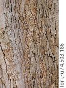 Купить «Фактура коры платана западного», эксклюзивное фото № 4503186, снято 12 апреля 2013 г. (c) Ната Антонова / Фотобанк Лори