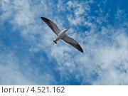 Чайка в небе. Стоковое фото, фотограф Илья Смирнов / Фотобанк Лори