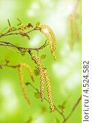 Купить «Весенние молодые листья и почки на светло-зеленом фоне», фото № 4524582, снято 8 мая 2012 г. (c) Игорь Соколов / Фотобанк Лори