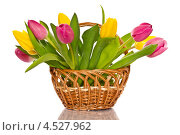 Купить «Букет тюльпанов в плетеной корзине», фото № 4527962, снято 17 апреля 2013 г. (c) Peredniankina / Фотобанк Лори