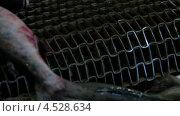 Купить «Рыба на конвейерной ленте», видеоролик № 4528634, снято 14 ноября 2010 г. (c) DPS / Фотобанк Лори