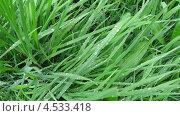 Зеленая трава после дождя. Стоковое фото, фотограф Александра Полупанова / Фотобанк Лори