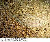 Купить «Леопардовая камбала или пятнистый ботус (Bothus pantherinus, Leopard flounder) крупным планом», фото № 4538070, снято 4 мая 2012 г. (c) Сергей Дубров / Фотобанк Лори