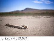 Купить «Соленое озеро Баскунчак», фото № 4539074, снято 22 августа 2010 г. (c) Алексей Шлыков / Фотобанк Лори