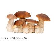 Купить «Белые грибы», фото № 4555654, снято 1 сентября 2012 г. (c) Воронин Владимир Сергеевич / Фотобанк Лори
