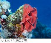 Коралл. Стоковое фото, фотограф Дмитрий Самарцев / Фотобанк Лори