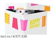 Подарок на день рождения. Котенок выглядывает в щелку между крышкой и коробкой. Стоковое фото, фотограф Ирина Кожемякина / Фотобанк Лори