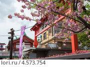 Купить «Цветущая сакура на территории храма Sensoji в городе Токио. Япония», фото № 4573754, снято 10 апреля 2013 г. (c) Кекяляйнен Андрей / Фотобанк Лори