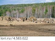 Висимский заповедник (2013 год). Редакционное фото, фотограф Андрей Казаков / Фотобанк Лори