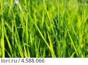 Трава. Стоковое фото, фотограф Игорь Алиев / Фотобанк Лори