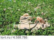 Женские шлепки среди цветущего клевера (2013 год). Редакционное фото, фотограф Алина Салащенко / Фотобанк Лори