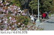 Купить «Императорский сад, Токио, Япония», видеоролик № 4616978, снято 11 мая 2013 г. (c) Кекяляйнен Андрей / Фотобанк Лори