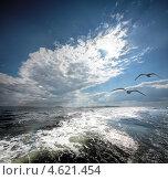 Купить «Птицы над Белым морем, Россия», фото № 4621454, снято 29 июня 2007 г. (c) photoff / Фотобанк Лори