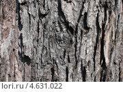 Купить «Фактура коры клена серебристого (сахаристого). Произрастает в Канаде и США», эксклюзивное фото № 4631022, снято 14 мая 2013 г. (c) Ната Антонова / Фотобанк Лори