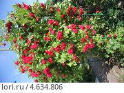 Роза розовая. Стоковое фото, фотограф Елена / Фотобанк Лори