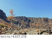 Осень в горах Алтая. Стоковое фото, фотограф Константин Нарыков / Фотобанк Лори