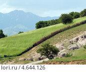 Склон холма, зелёное поле с изгородью, летний пейзаж. Стоковое фото, фотограф Сергей Жадов / Фотобанк Лори