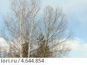 Лес. Стоковое фото, фотограф Надежда Бурцева / Фотобанк Лори