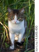 Кот сидит в траве. Стоковое фото, фотограф Ксения Козырь / Фотобанк Лори