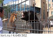 Посетители кормят лошадь в зоопарке (2011 год). Редакционное фото, фотограф Ксения Козырь / Фотобанк Лори