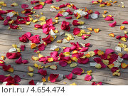 Лепестки роз. Стоковое фото, фотограф Ксения Лунчук / Фотобанк Лори