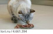 Купить «Породистая кошка ест мясо», видеоролик № 4661394, снято 25 мая 2013 г. (c) Юлия Машкова / Фотобанк Лори