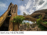Купить «Экзотическое дерево в биопарке на фоне неба», фото № 4674046, снято 7 мая 2013 г. (c) Евгений Андреев / Фотобанк Лори