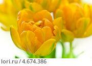 Купить «Букет желтых тюльпанов», фото № 4674386, снято 10 апреля 2013 г. (c) Сурикова Ирина / Фотобанк Лори