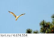 Купить «Полет чайки на фоне неба», эксклюзивное фото № 4674554, снято 2 мая 2013 г. (c) Юрий Морозов / Фотобанк Лори