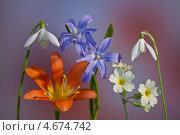 Весенний букет. Стоковое фото, фотограф Виктор Зандер / Фотобанк Лори